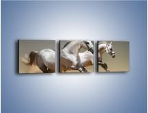 Obraz na płótnie – Białe konie w pustynnym galopie – trzyczęściowy Z055W1