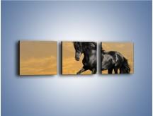 Obraz na płótnie – Bieg z koniem po polanie – trzyczęściowy Z057W1