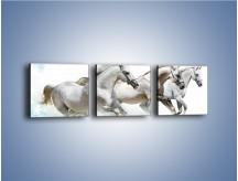 Obraz na płótnie – Końskie trio w zimowym pędzie – trzyczęściowy Z063W1