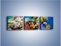 Obraz na płótnie – Fauna i kolorowi towarzysze – trzyczęściowy Z116W1