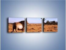 Obraz na płótnie – Lew i ludzki bałagan – trzyczęściowy Z125W1