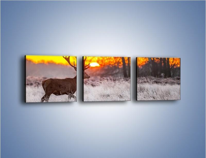 Obraz na płótnie – Jeleń o zachodzie słońca – trzyczęściowy Z164W1
