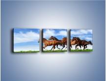Obraz na płótnie – Galopujące stado brązowych koni – trzyczęściowy Z172W1