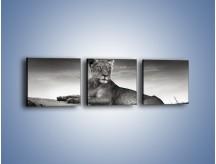 Obraz na płótnie – Lwica w sepii – trzyczęściowy Z205W1