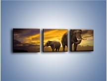Obraz na płótnie – Ciekawość małego słonika – trzyczęściowy Z212W1