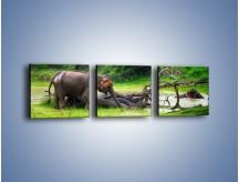Obraz na płótnie – Kąpiel ze słoniem – trzyczęściowy Z216W1