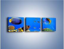 Obraz na płótnie – Kolory tęczy pod wodą – trzyczęściowy Z220W1