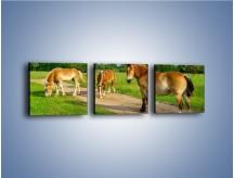 Obraz na płótnie – Konie z gospodarstwa – trzyczęściowy Z242W1