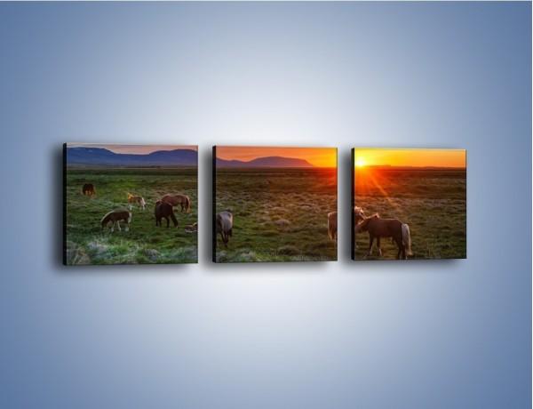 Obraz na płótnie – Konne stado o zachodzie słońca – trzyczęściowy Z249W1