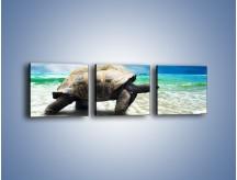 Obraz na płótnie – Jak tu nie kochać żółwi – trzyczęściowy Z251W1