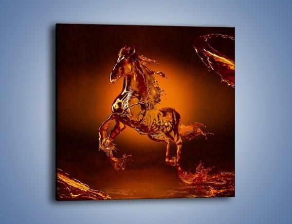 Obraz na płótnie – Wodny koń w mocnym świetle – jednoczęściowy kwadratowy GR228