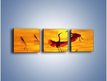 Obraz na płótnie – Czaple i zachód słońca – trzyczęściowy Z302W1