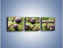 Obraz na płótnie – Ciężka praca mrówek – trzyczęściowy Z308W1