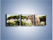 Obraz na płótnie – Cała zwinność geparda – trzyczęściowy Z315W1