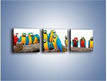 Obraz na płótnie – Kolorowe stado papug – trzyczęściowy Z326W1