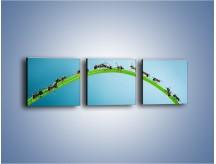 Obraz na płótnie – Mrówki na zielonym moście – trzyczęściowy Z336W1