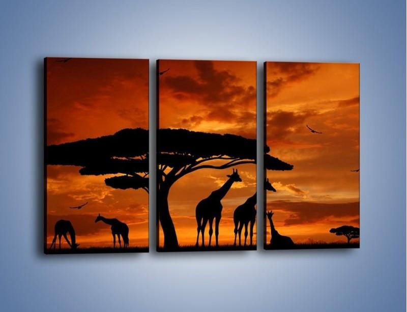 Obraz na płótnie – Żyrafy wieczorową porą – trzyczęściowy GR266W2