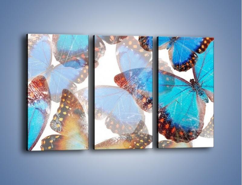 Obraz na płótnie – Motyl w niebieskim kolorze – trzyczęściowy GR403W2