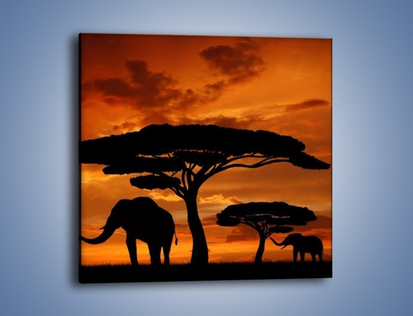 Obraz na płótnie – Słonie w nocnej porze – jednoczęściowy kwadratowy GR284