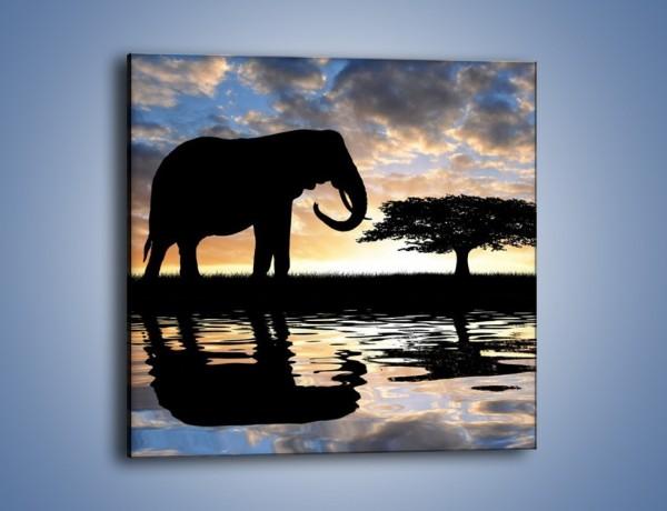 Obraz na płótnie – Samotność wśród słoni – jednoczęściowy kwadratowy GR317