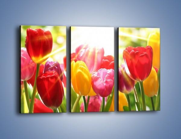 Obraz na płótnie – Bajecznie słoneczne tulipany – trzyczęściowy K428W2