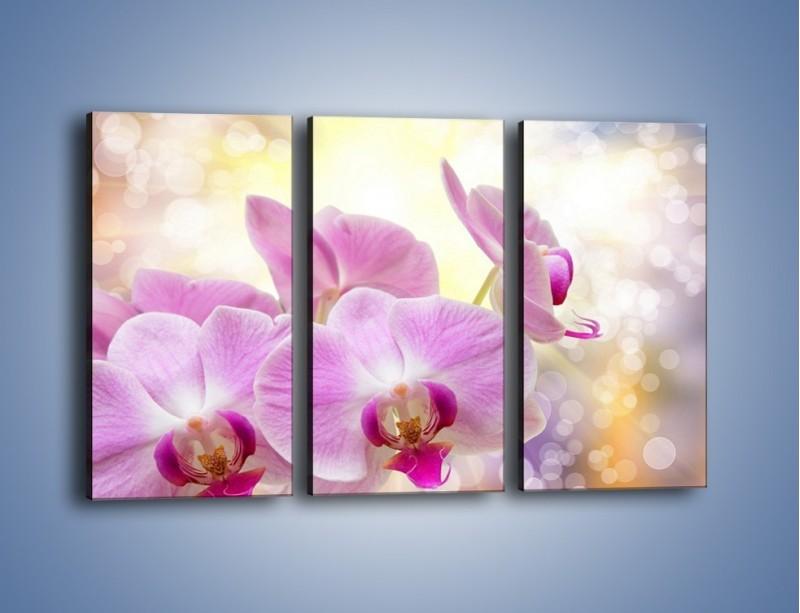 Obraz na płótnie – Lila kwiaty o poranku – trzyczęściowy K976W2