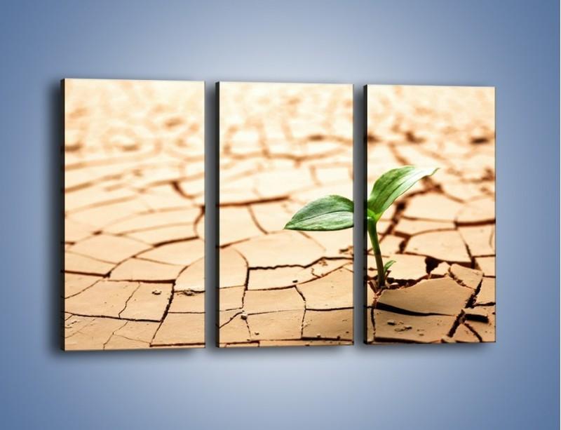 Obraz na płótnie – Łodyga w spękanej ziemi – trzyczęściowy KN013W2