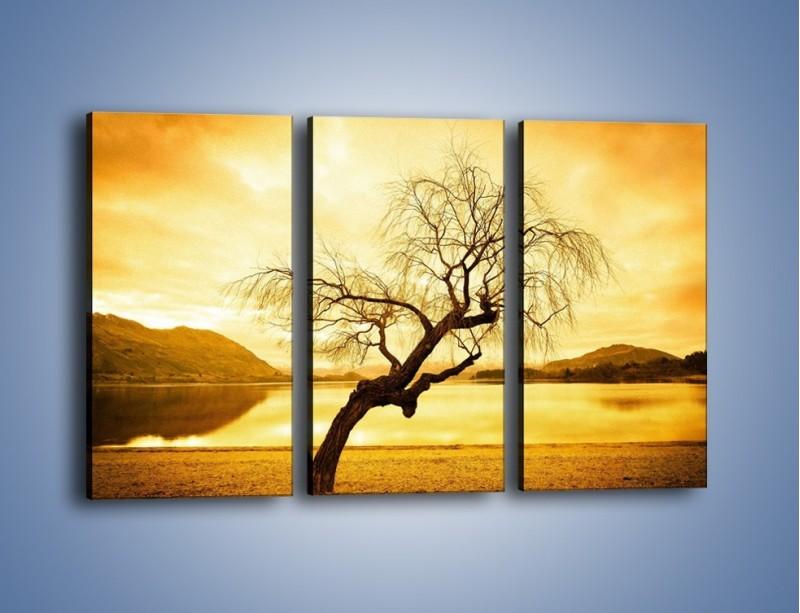 Obraz na płótnie – Pochylone drzewo w sepii – trzyczęściowy KN1033W2