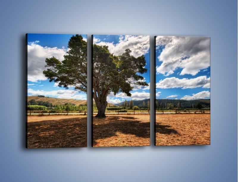 Obraz na płótnie – Cień pod rozłożystym drzewem – trzyczęściowy KN1037W2