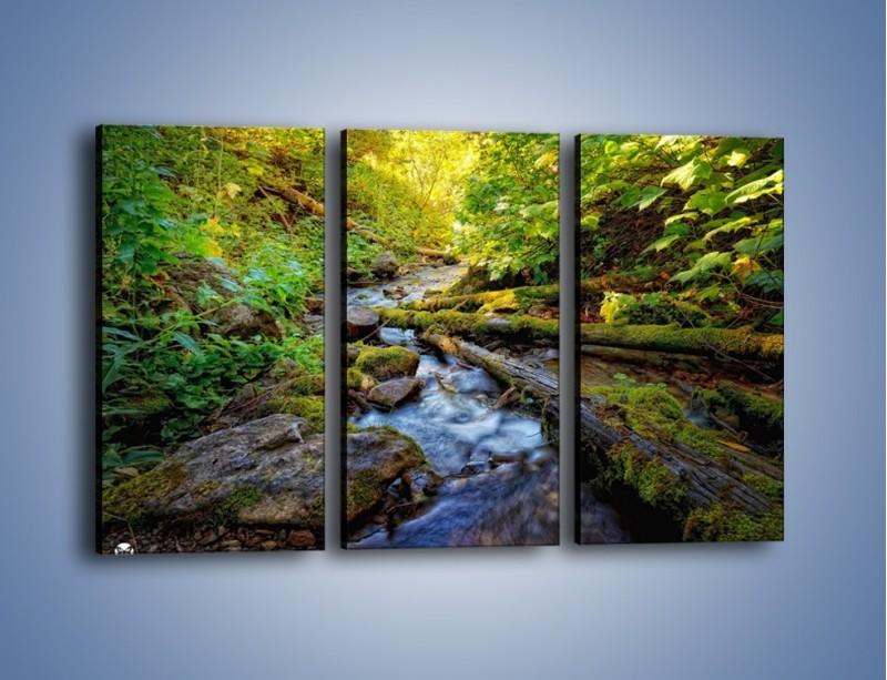 Obraz na płótnie – Drewno ścięte do wody – trzyczęściowy KN1059W2