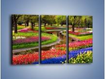 Obraz na płótnie – Aleje kolorowych tulipanów – trzyczęściowy KN1079W2