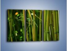 Obraz na płótnie – Bambusowe łodygi z bliska – trzyczęściowy KN118W2