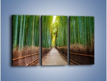 Obraz na płótnie – Bambusowy las – trzyczęściowy KN1187AW2