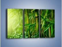 Obraz na płótnie – Bambus w roli głównej – trzyczęściowy KN1202AW2