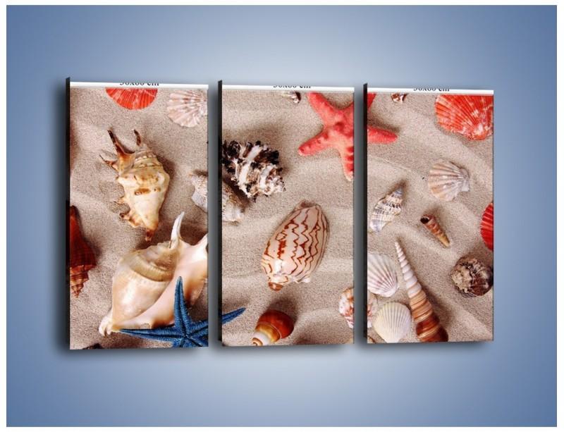 Obraz na płótnie – Kolorowe skorupiaki – trzyczęściowy KN1214AW2