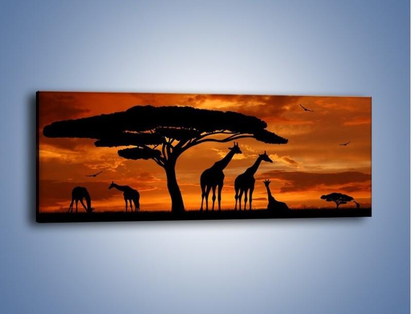 Obraz na płótnie – Żyrafy wieczorową porą – jednoczęściowy panoramiczny GR266