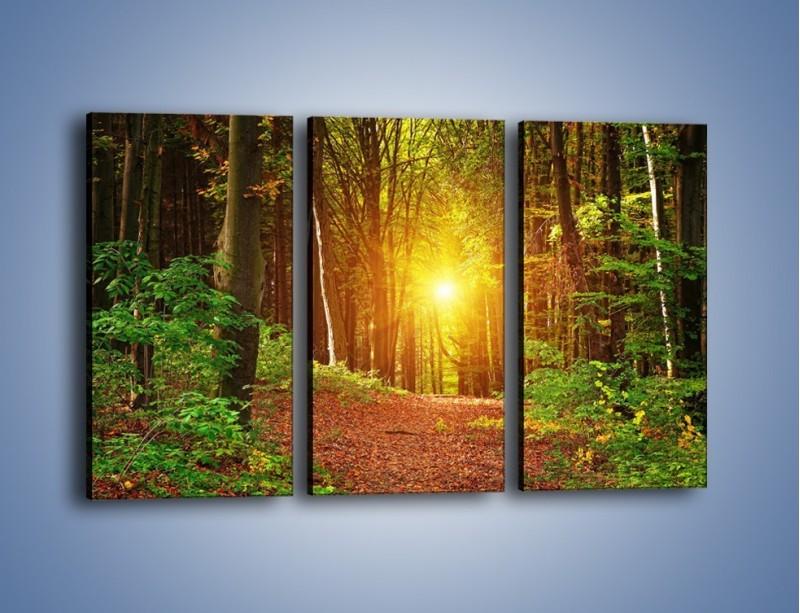 Obraz na płótnie – Polski krajobraz leśny – trzyczęściowy KN1257AW2