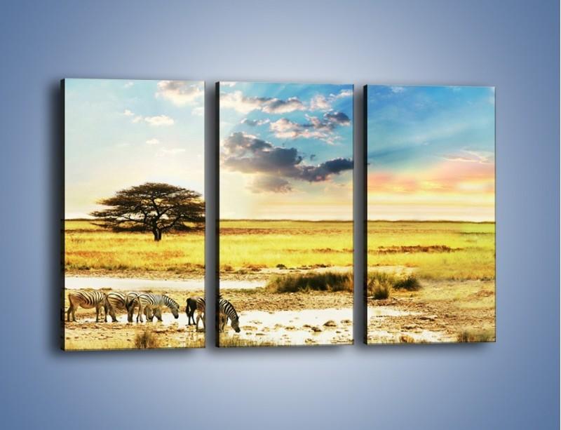 Obraz na płótnie – Zebry na sawannie – trzyczęściowy KN1298AW2