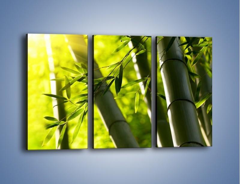Obraz na płótnie – Twarde łodygi bambusa – trzyczęściowy KN1314AW2