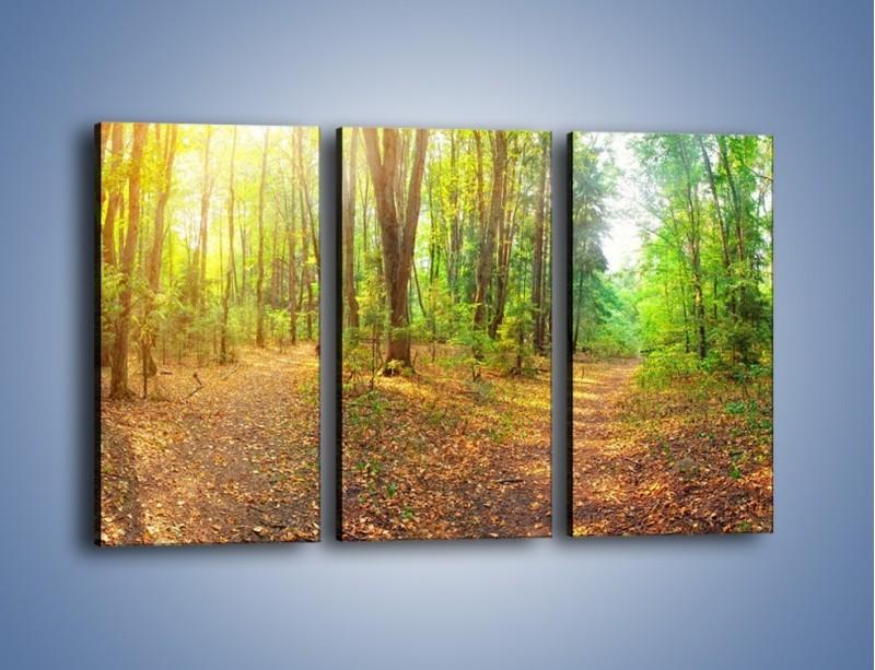 Obraz na płótnie – Przejrzysty piękny las – trzyczęściowy KN1344AW2