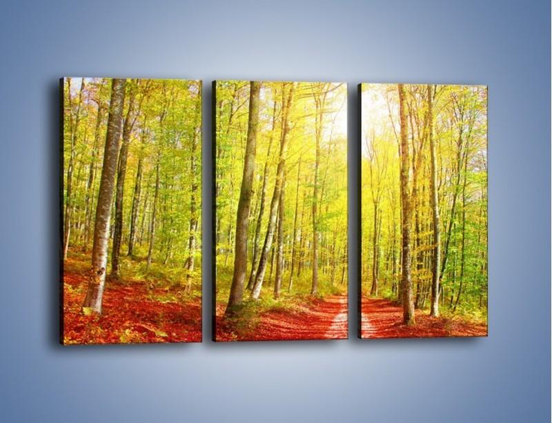 Obraz na płótnie – Brzózki liście i las – trzyczęściowy KN1345AW2