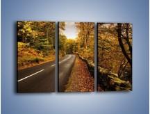 Obraz na płótnie – Asfaltową droga przez las – trzyczęściowy KN169W2