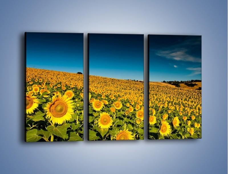 Obraz na płótnie – Słonecznikowe uśmiechnięte główki – trzyczęściowy KN205W2