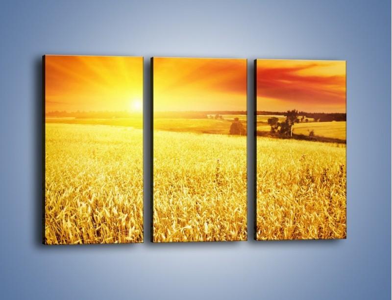 Obraz na płótnie – Zboże złote jak słońce – trzyczęściowy KN398W2