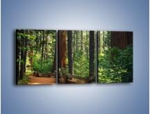 Obraz na płótnie – Chodźmy do lasu – trzyczęściowy KN611W2