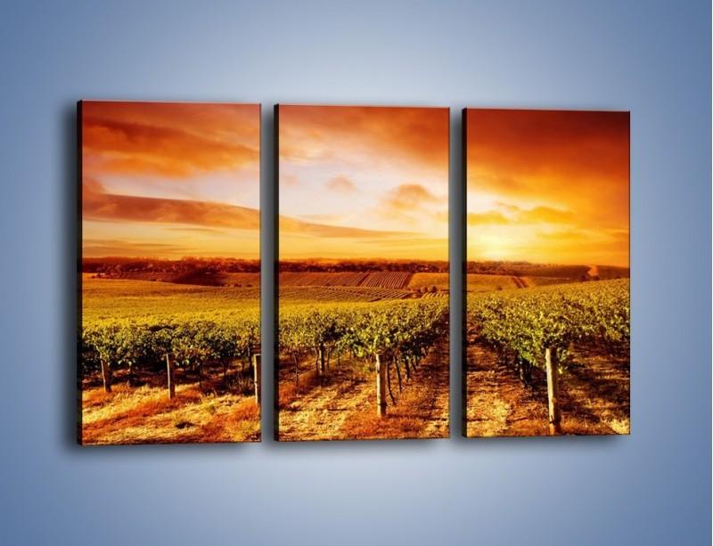 Obraz na płótnie – Ziemia i uprawy – trzyczęściowy KN673W2