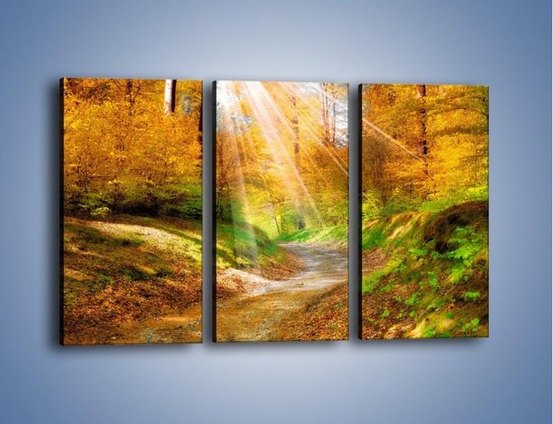 Obraz na płótnie – Promienną i słoneczną ścieżką przez las – trzyczęściowy KN989W2