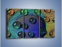 Obraz na płótnie – Kropelki na pawim oku – trzyczęściowy O047W2