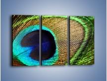 Obraz na płótnie – Cudowne pawie oko – trzyczęściowy O048W2