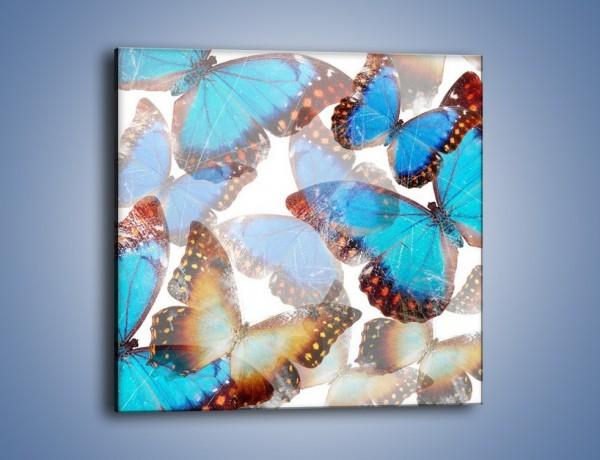 Obraz na płótnie – Motyl w niebieskim kolorze – jednoczęściowy kwadratowy GR403